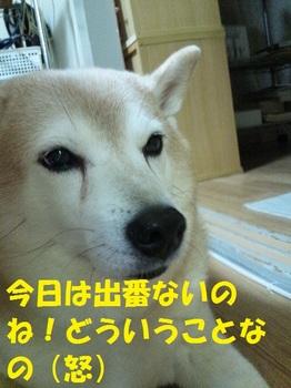 20121101_06.JPG