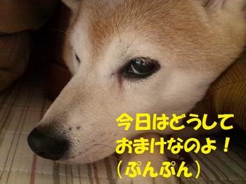 20130317_03.JPG