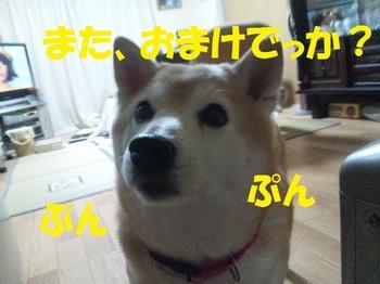 20130408_04.JPG