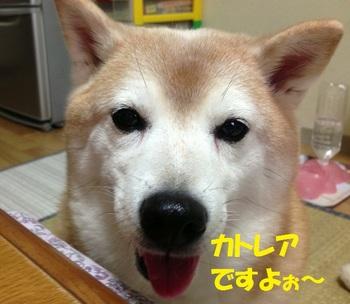 20130509_00.JPG