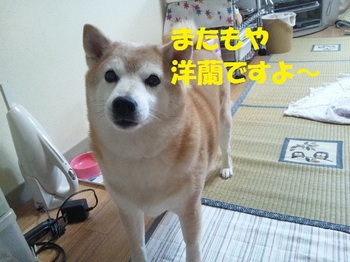 20130513_00.JPG