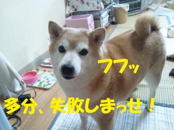 20130513_06.JPG