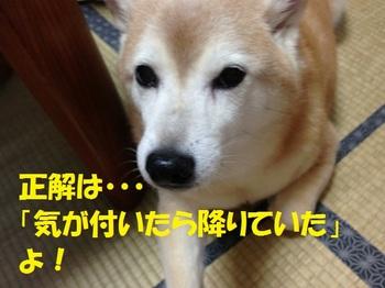 20130827_07.JPG