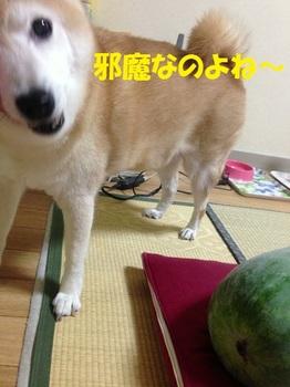 20130831_03.JPG