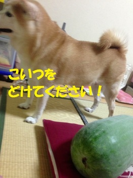 20130831_04.JPG