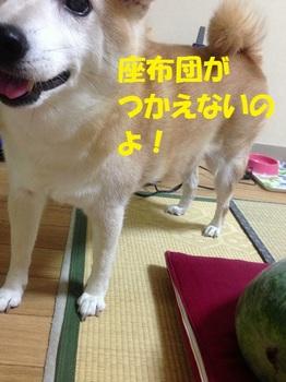 20130831_05.JPG