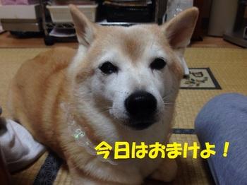 20131110_03.JPG