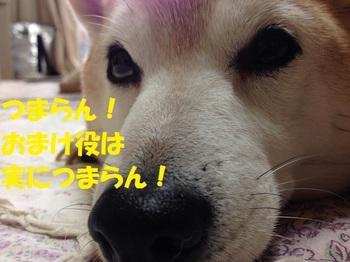 20140609_02.JPG