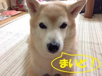 20140914_04.JPG