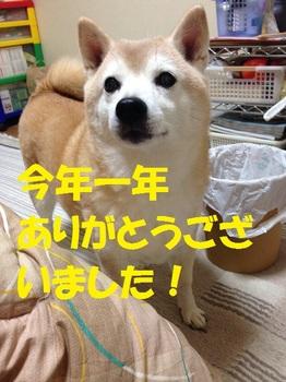 20141231_01.JPG