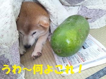 20121111_05.JPG