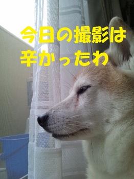 20121111_08.JPG