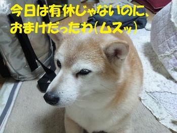 20130121_11.JPG