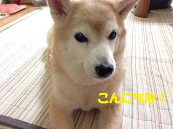 20140607_01.JPG